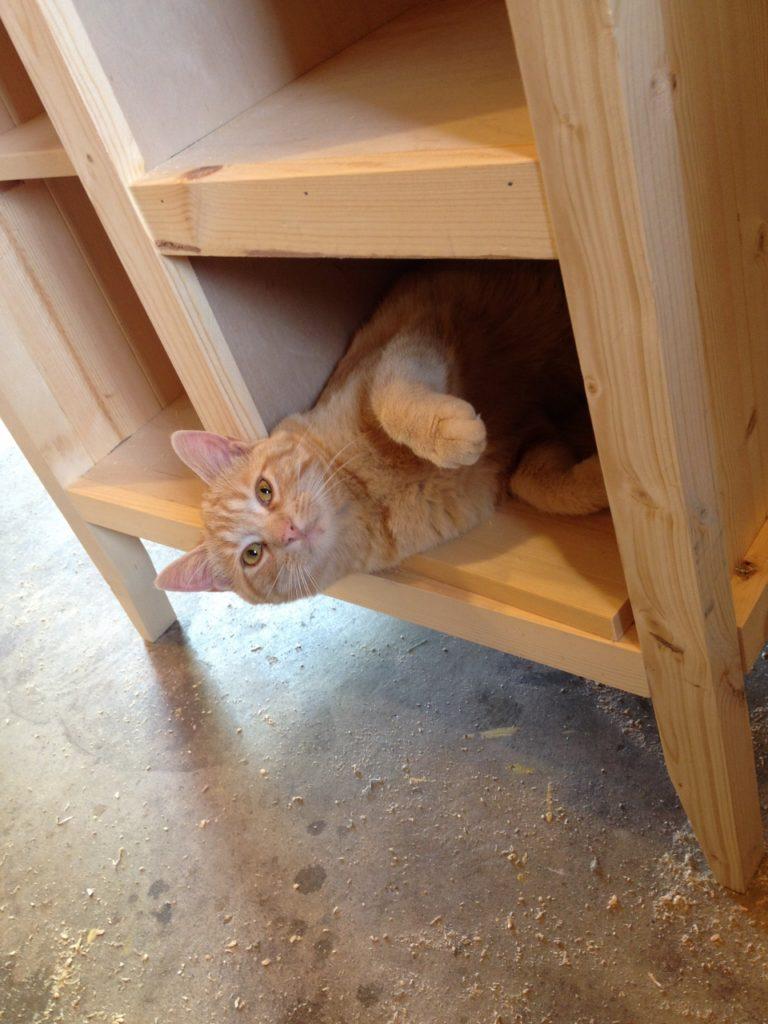 Orange baby in cabinet 3