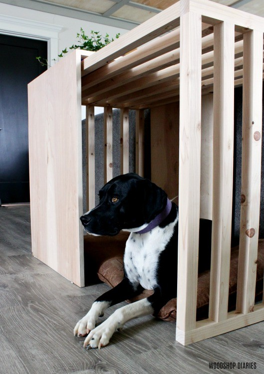 Lucy looking out in slatted sides dog crate with sliding plywood door open