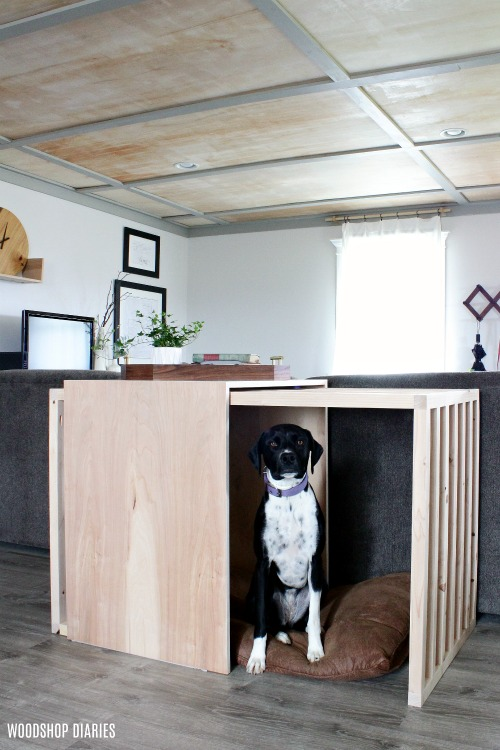 Lucy in DIY modern dog crate with plywood ceiling in back ground