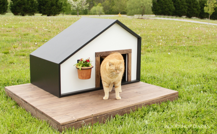 DIY Black and white modern pet house with wooden deck--orange tabby cat hanging out on top